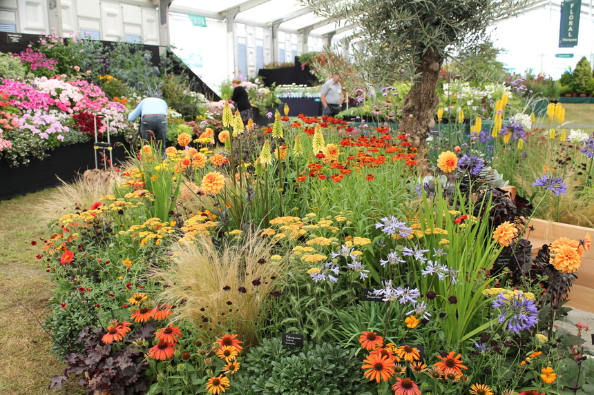 Another Gold at RHS Hampton Court and best floral exhibit!
