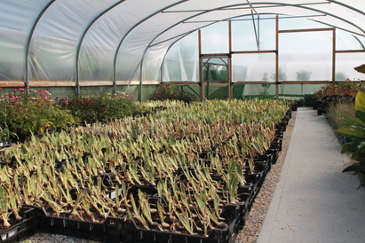 Iris propagation in full swing
