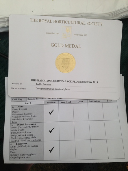 Hampton Flower Show Gold 3 Years straight