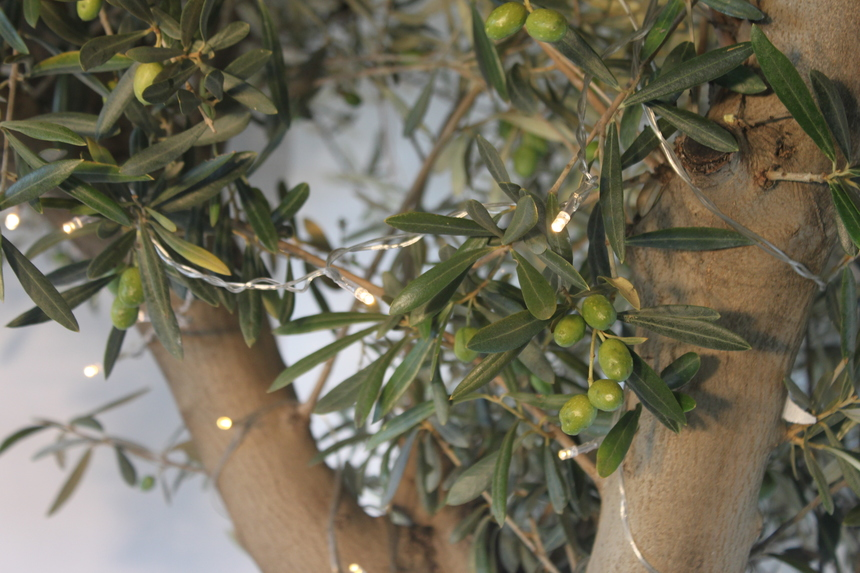 Light up your Olive Trees